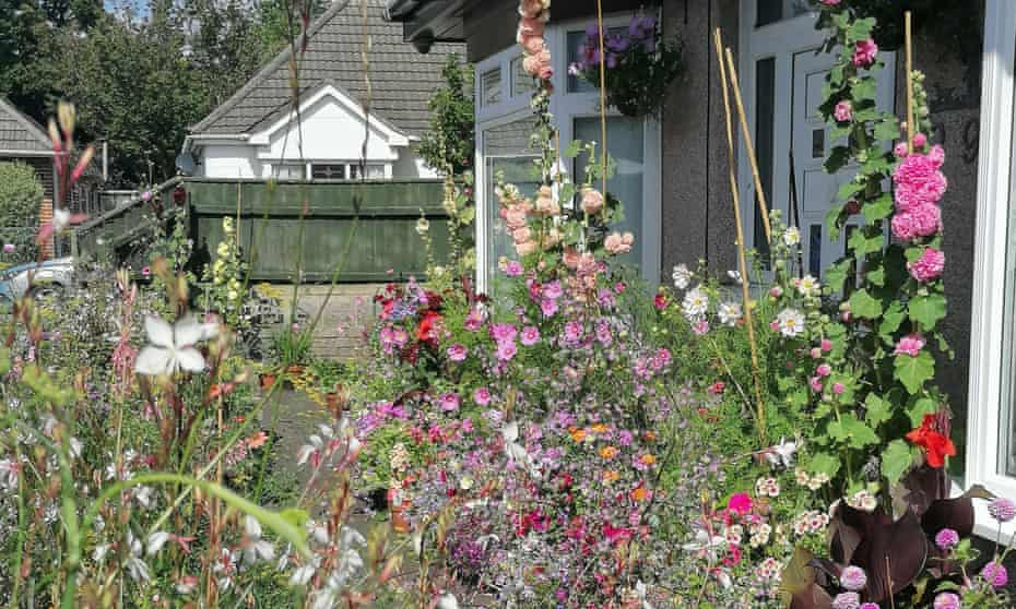 Paul Collins's front garden, a wash of feathery colour