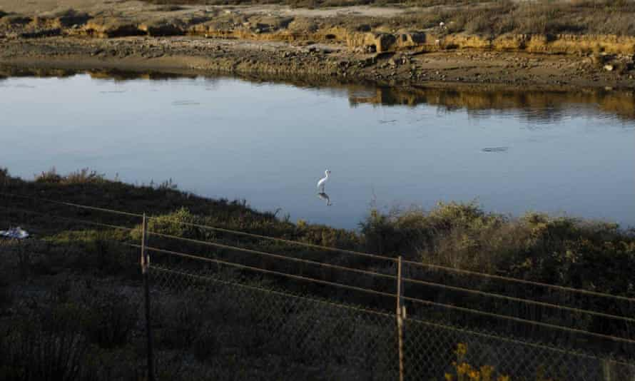 The area affected by the latest spill is home to threatened and endangered species, including a plump shorebird called the snowy plover, the California least tern and humpback whales.