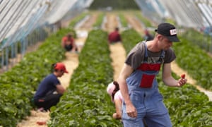 The UK's food system depends on migrant labour