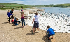 Feeding time at the Abbotsbury swan sanctury