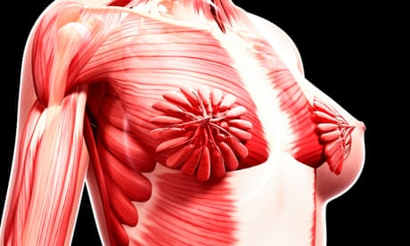 How a viral image of breasts exposes science's obsession with the male body