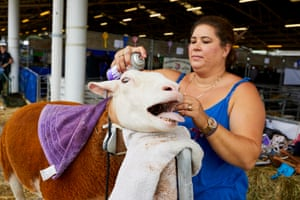 A sheep is tended to at the Great Yorkshire show