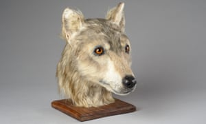 Cuween Hill neolithic dog reconstruction