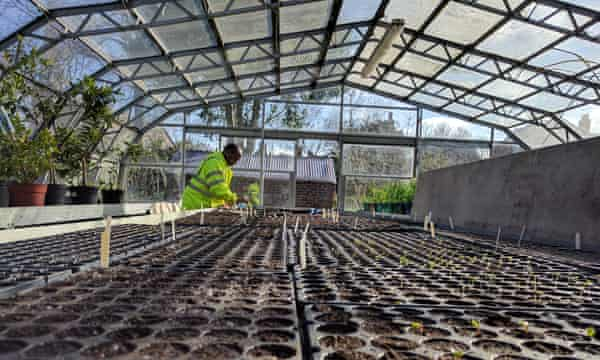 Hundreds of seedlings preparing to sprout at Loughborough Park Community Garden, south London.