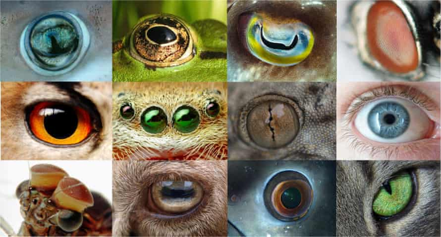 Eyes come in a variety of shapes and sizes across the animal kingdom.