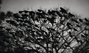'An impressionistic narrative': one of the images from Ravens