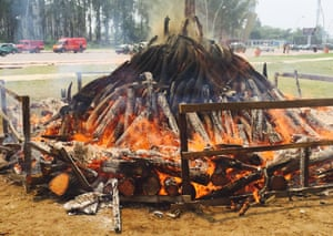 Burning ivory today in the Congo