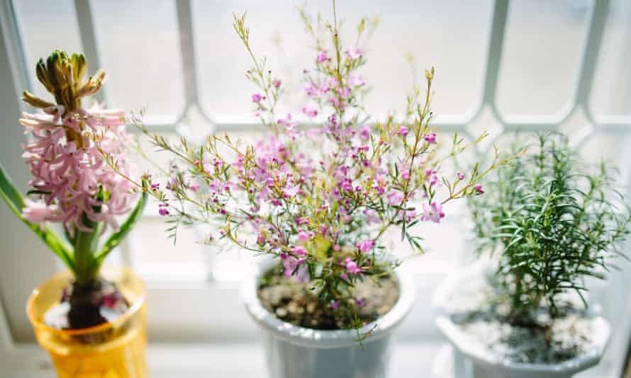 Plant in a white pot a window sill