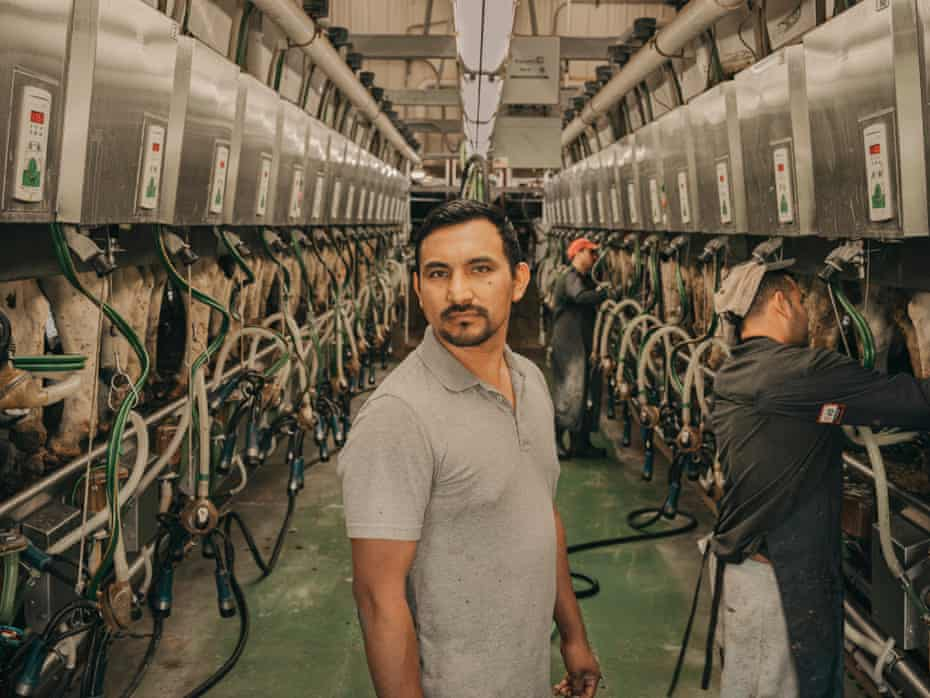 Solomon, a dairy worker, stands in a milking parlor. On either side of him are rows of cows backed up to milking machines. Two workers are attaching the machines in the background.