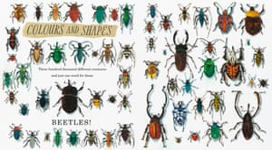 Beetles are the most diverse animal family on the planet with around 400,000 known species and probably as many waiting to be discovered. They range in size from creatures not much bigger than a comma, to those as big as your palm, and the parts they play in habitats around the world are as diverse as their sizes, shapes, and colours.