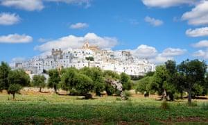 Olive groves surround the city of Ostuni in Puglia.