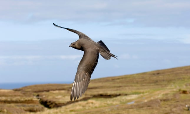 British birds' long-distance feats and longevity are revealed