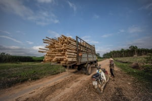 A truck loaded with acacia leaves the plantation in Phú Lộc.
