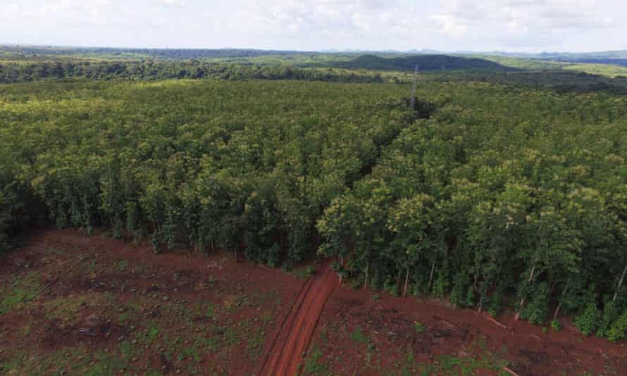A plantation in Tanzania's Kilombero valley.