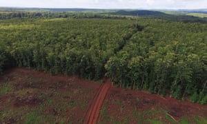 Teak plantation Kilombero valley, Tanzania