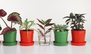 Just Add Water How To Take Cuttings From Houseplants Life And Style The Guardian