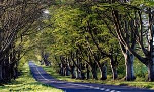 Empty roads in Kingston Lacy, Dorset