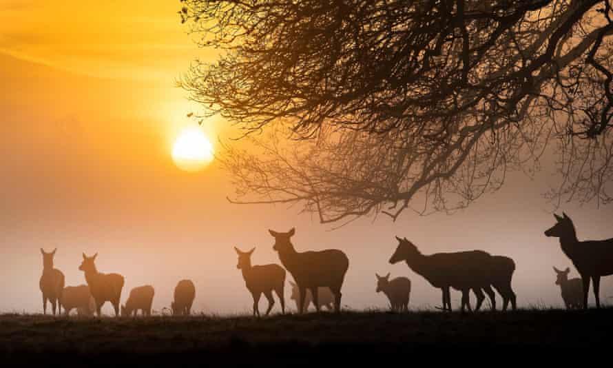 Deer feeding at first light.