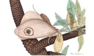 Life reconstruction of the Oreogramma lacewing