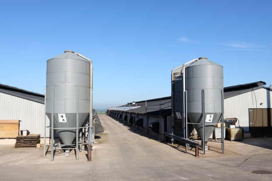 Feed silos outside broiler chicken sheds at a poultry farm in Shropshire