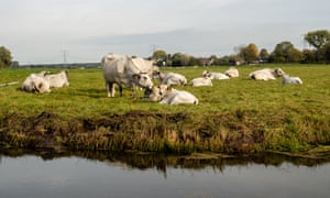 In the Netherlands a number of cases have been brought against cattle traders and slaughterhouses for transporting and offering sick cattle for slaughter.