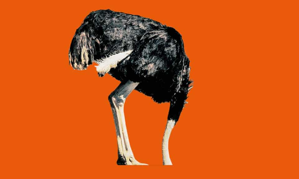 Ostrich with head in the sand