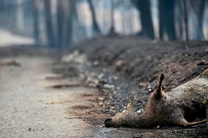 A dead deer lays on the roadside in an area affected by a wildfire near Figueiró dos Vinhos, Portugal. Forest fires killed more than 60 people before being brought under control.