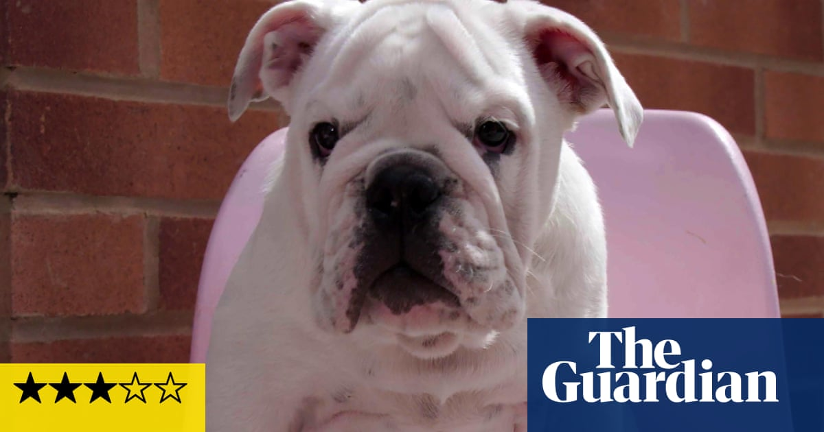 Puppy School review – cute, but less jeopardy than a Bake Off highlights reel
