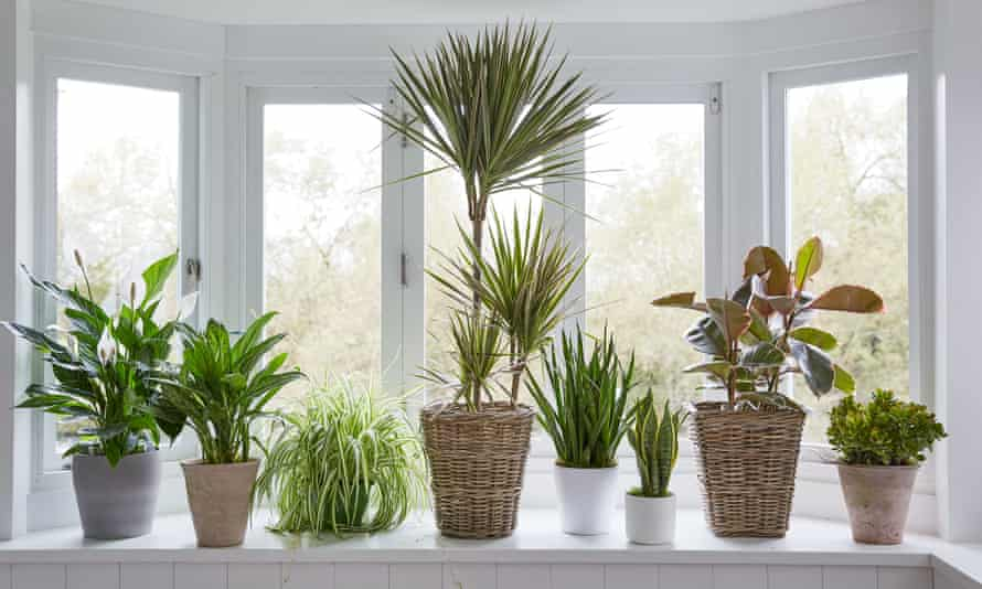 Don't worry, it may never happen ... houseplants get emotional.