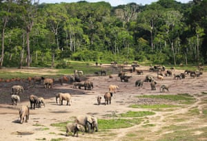 Dozens of elephants gather at Dzanga Bai in Central African Republic, as seen in the Earth from Space series on BBC1.