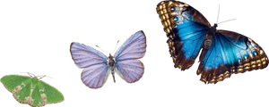 Green, lilac and blue butterflies