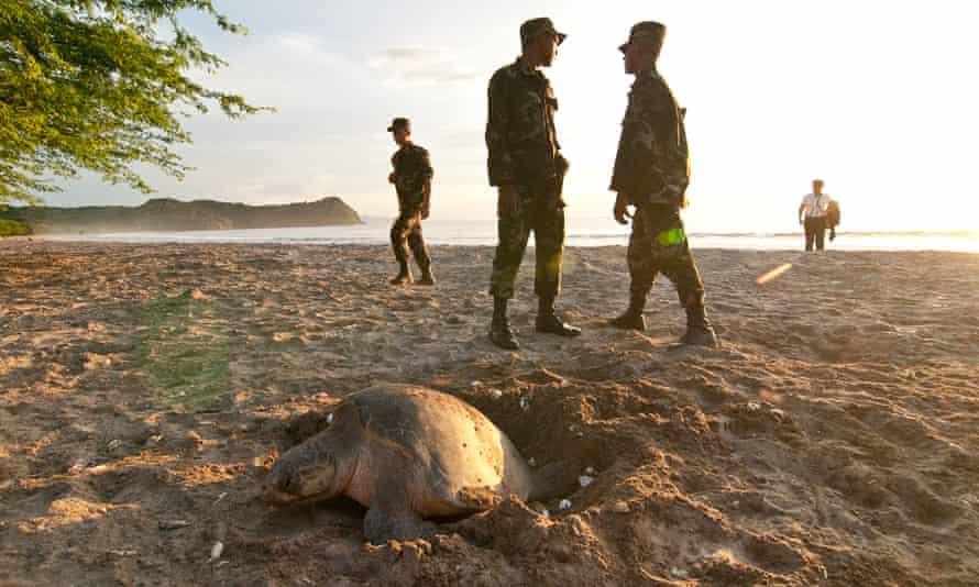 The Nicaraguan military patrols sea turtle nesting beaches to prevent poaching.