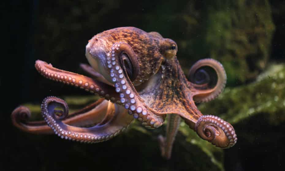 The octopus: master of proprioception