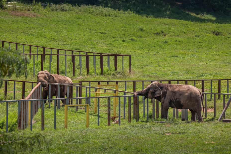 Two elephants in a field at the Elephant Sanctuary Tennessee