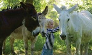 donkeys at Anes de la Vassivière