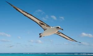 Albatross ... 'They are loving, sensitive and graceful,' says Jordan.