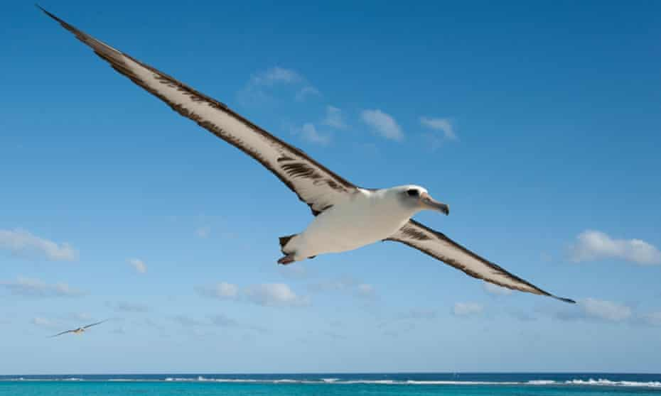 Albatross ... 'They are loving, sensitive and graceful,' says Jordan.