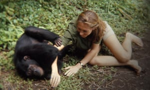 A still from the documentary Jane, about her life and work with chimpanzees