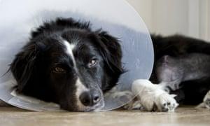 Poorly dog