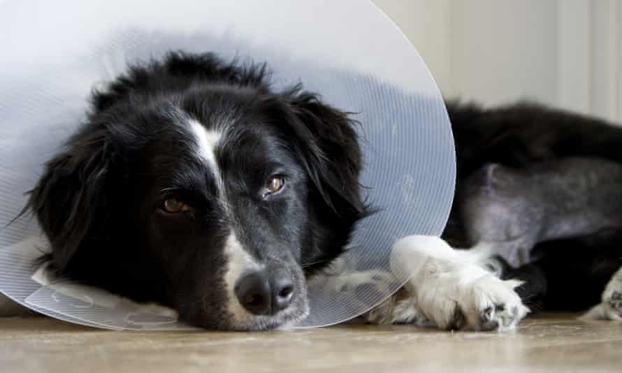 'Pets are yet another thing that are used by people as an excuse to poor-shame.'