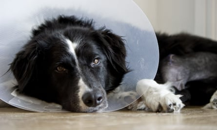 An Italian woman has been granted sick pay during time off to care for her ill dog.