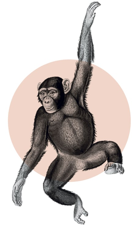 We share 98% of our DNA with chimpanzees.