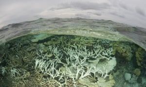 Tubbataha Reefs Natural Park lagoon looking bleached due to an infestation of crown-of-thorn starfish.