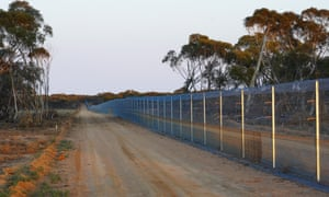 Feral predator-proof fence built in Mallee Cliffs national park.