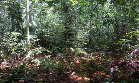 World's largest tropical peatland found in Congo basin