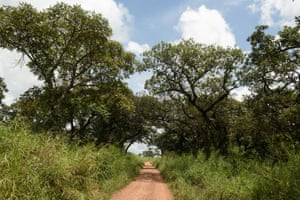Trees in Nwoya district, northern Uganda