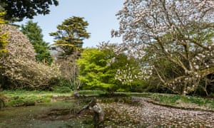 Trewidden, Penzance, Cornwall, UK. The central pond with its whale statue and the largest magnolia in the UK.