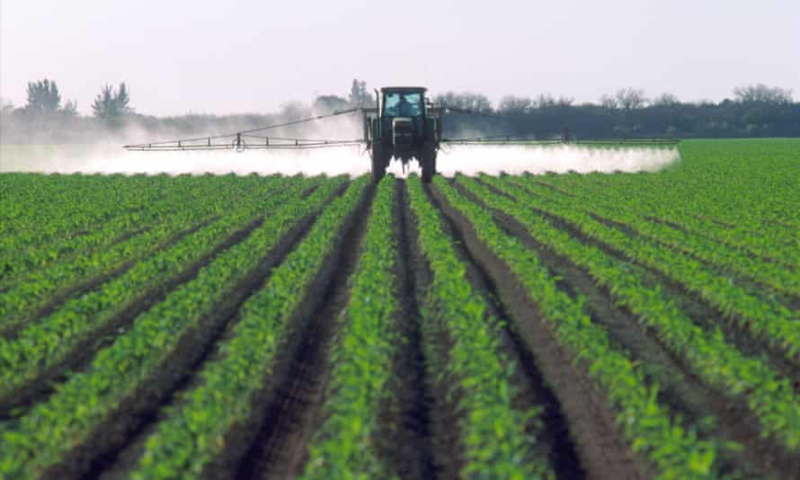 Pesticides are applied to Florida sweetcorn.