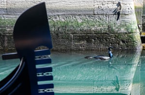 A seabird swims across clearer waters in a Venice canal on 17 March.