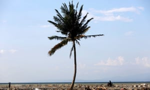 A solitary tree on the tsunami-devastated Talise beach.